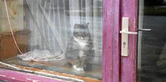 Okno przesuwne czy tradycyjne
